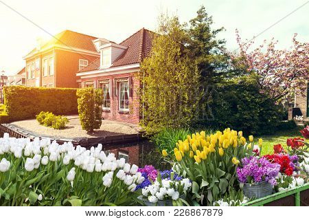 Landscape with tulips, traditional dutch windmills and houses near the canal in Zaanse Schans, Netherlands, Europe. stock photo