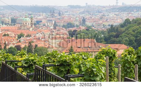 Prague - the capital of the Czech Republic. Panorama of the city, landscape view with red roofs. stock photo