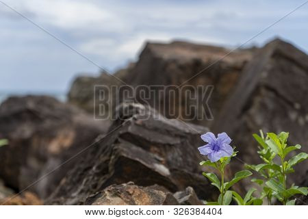 Flower blue with stone or rock background stock photo
