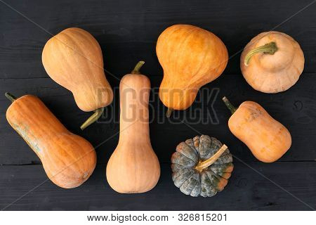 Butternut and moschata organic squashes varieties on black wooden board background. stock photo