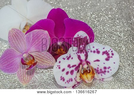 Different phalaenopsis flowers (orchid) on light silver sparkling background with bokeh stock photo