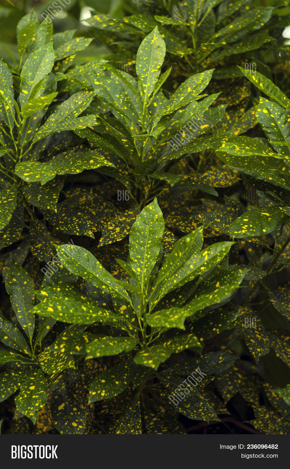 🔥 Floral Background - Green In Gold Speckls Leaves Of Gold ... on 8 leaf house plant, 3 leaf outdoor plant, 5 leaf house plant, 3 leaf plant identification,