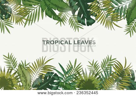 Horizontal Background With Green Leaves Of Tropical Palm Tree, Banana And Monstera. Elegant Backdrop