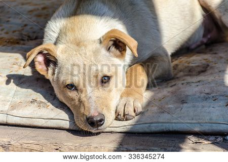 Outbred red puppy sad at the shelter on a dirty litter stock photo
