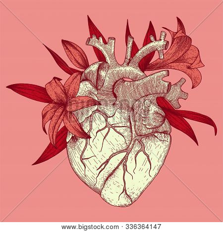Vector illustration of anatomy heart with lily flowers for t-shirt print for st. valentines day holiday stock photo