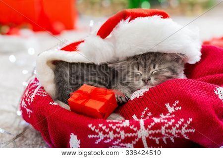 Christmas Cat Wearing Santa Claus Hat Holding Gift Box Sleeping On Plaid Under Christmas Tree. Chris
