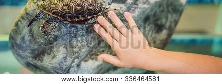 Little kid boy admire big turtles in terrarium through the glass BANNER, LONG FORMAT stock photo