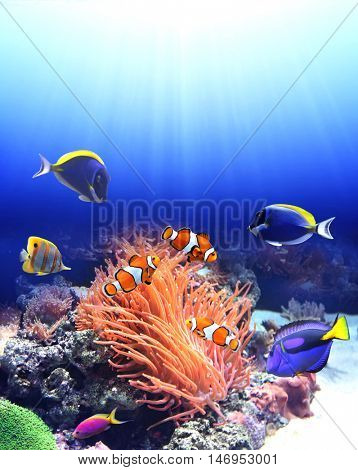 Underwater scene with anemone and tropical fish - blue tang, clown fish, paracanthurus-Lg Fridge Magnet Skin (size 36x65)