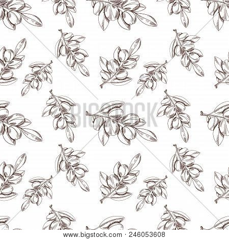 Vector Seamless Pattern: Argan Oil, Sketch Style Background, Outline Plant Drawings. Endless Background. stock photo
