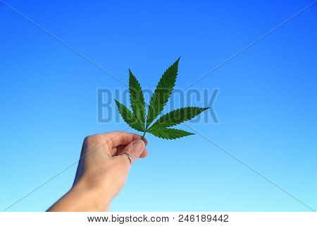 Women's hands holding a canabis leaf against a blue sky stock photo