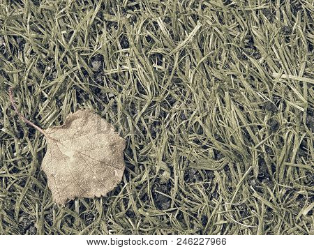 Aggressive pollen causes breathing problems and allergic reactions in the eyes. Detail of football grass in spring. Dots of tree and grass pollen. stock photo