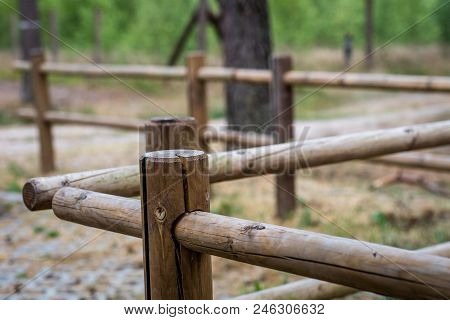 Pine cultivation in a wooded area. Young pine trees growing in a fenced area. Season of the summer. stock photo