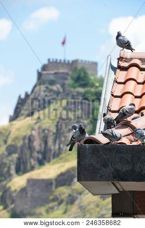 Ankara, Turkey - Pigeons on roofs and Ankara Citadel stock photo
