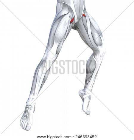 Concept conceptual 3D illustration fit strong front upper leg human anatomy, anatomical muscle isolated white background for body medical health tendon foot and biological gym fitness muscular system stock photo