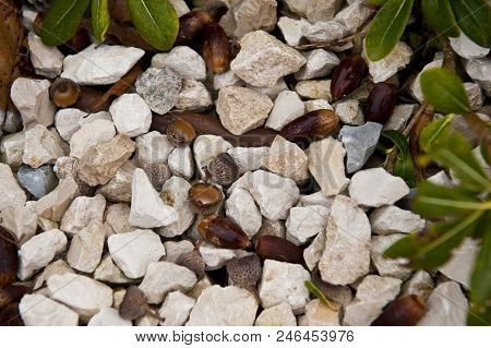 Abstract outdoor close up view of oak acorns mixed with gravels under the tree. Pattern of different brown and grey elements and small natural things. Many small white and grey stones with brown nuts. stock photo