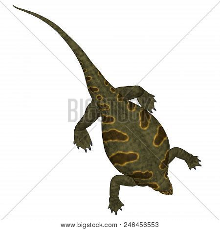 Cotylorhynchus Dinosaur on White 3D illustration - Cotylorhynchus was a synapsid herbivorous reptile that lived in North America during the Permian Period. stock photo