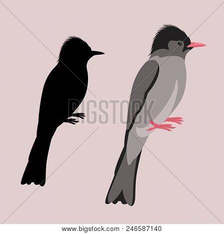 himalayan  black bulbul  bird vector illustration flat style black silhouette set stock photo