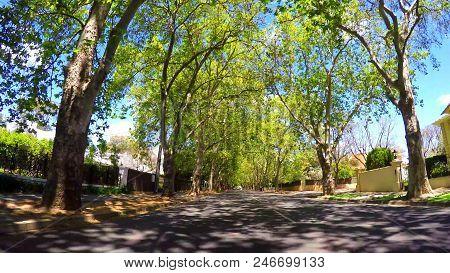 Vehicle POV, driving under beautiful tree canopy along scenic Victoria Avenue, Unley Park. stock photo