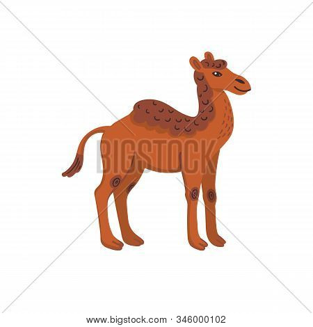 Extinct animals. Camelops, western camel. Prehistoric extinct american one-humped camel. Flat style vector illustration isolated on white background. stock photo