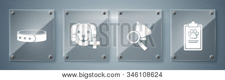 Set Clipboard with medical clinical record pet, Veterinary clinic symbol, Veterinary clinic symbol and Collar with name tag. Square glass panels. Vector stock photo
