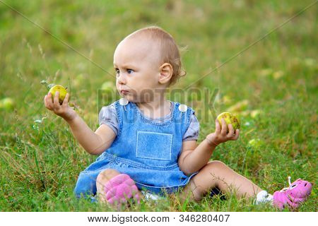 A child sits in a field with fallen not fresh apples in his hands stock photo