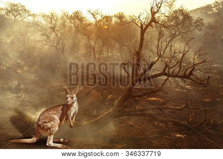 Composition about Australian wildlife in bushfires of Australia in 2020. Kangaroo with fire on background. January 2020 fire affecting Australia is considered the most devastating and deadly ever seen stock photo