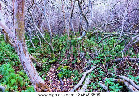Lush plants and trees with curved branches creating an abstract look taken in a rural temperate forest in rural Northern California stock photo