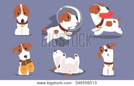 Cute Funny Beagle Dog Collection, Adorable Pet Animal Character in Different Situations Vector Illustration stock photo