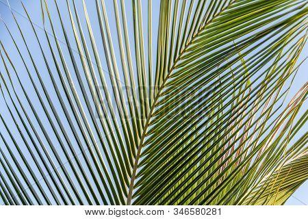 The beautiful big Cocos nucifera palm leaf is on the beach orange sunrise sky background stock photo