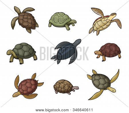 Sea turtle, tortoise and terrapin cartoon icons of wild animals. Vector reptiles with shells, feet or flippers, tails, green, black and brown carapaces, land and water turtles of zoo, wildlife design stock photo