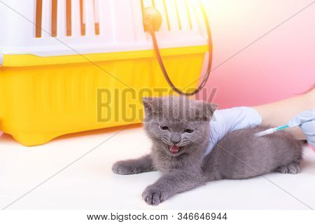 Cat At The Reception Of A Veterinarian. Cat At The Veterinary Table. Veterinary Medicine Animal Trea