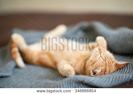 Cute red kitten with classic marble pattern sleeps on the back on sofa. Adorable little pet. Cute child animal stock photo