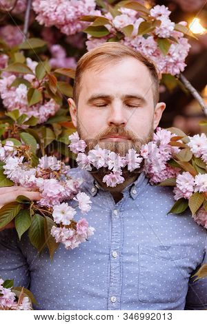 A bearded man with a decorated beard for the Spring holiday. Flower in the beard. Freshness concept. Guy with blooming cherry or sakura flowers in beard. Man with beard and mustache enjoy spring stock photo