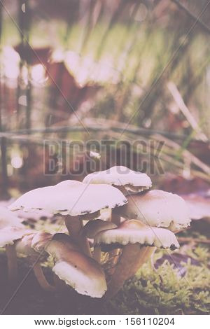 Close Up Of Toadstools Growing On The Woodland Floor Vintage Retro Filter.-Dishwasher Magnet Skin (size 24x24)