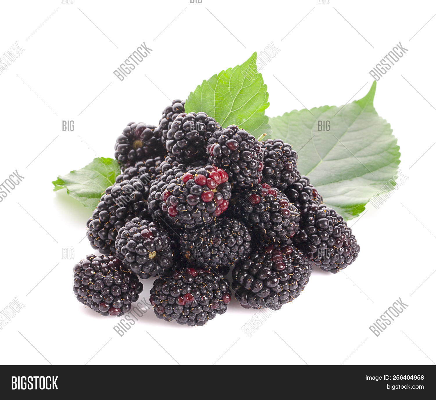 background,berry,best,black,blackberries,brambleberry,clipping,close-up,closeup,delicious,dessert,diet,eating,food,fresh,freshness,fruit,gourmet,group,healthy,horizontal,ingredient,isolated,juicy,leaf,macro,natural,nature,nobody,one,organic,path,raspberry,raw,red,retouched,ripe,seen,single,standing,studio,summer,sweet,three,two,white,whole,you