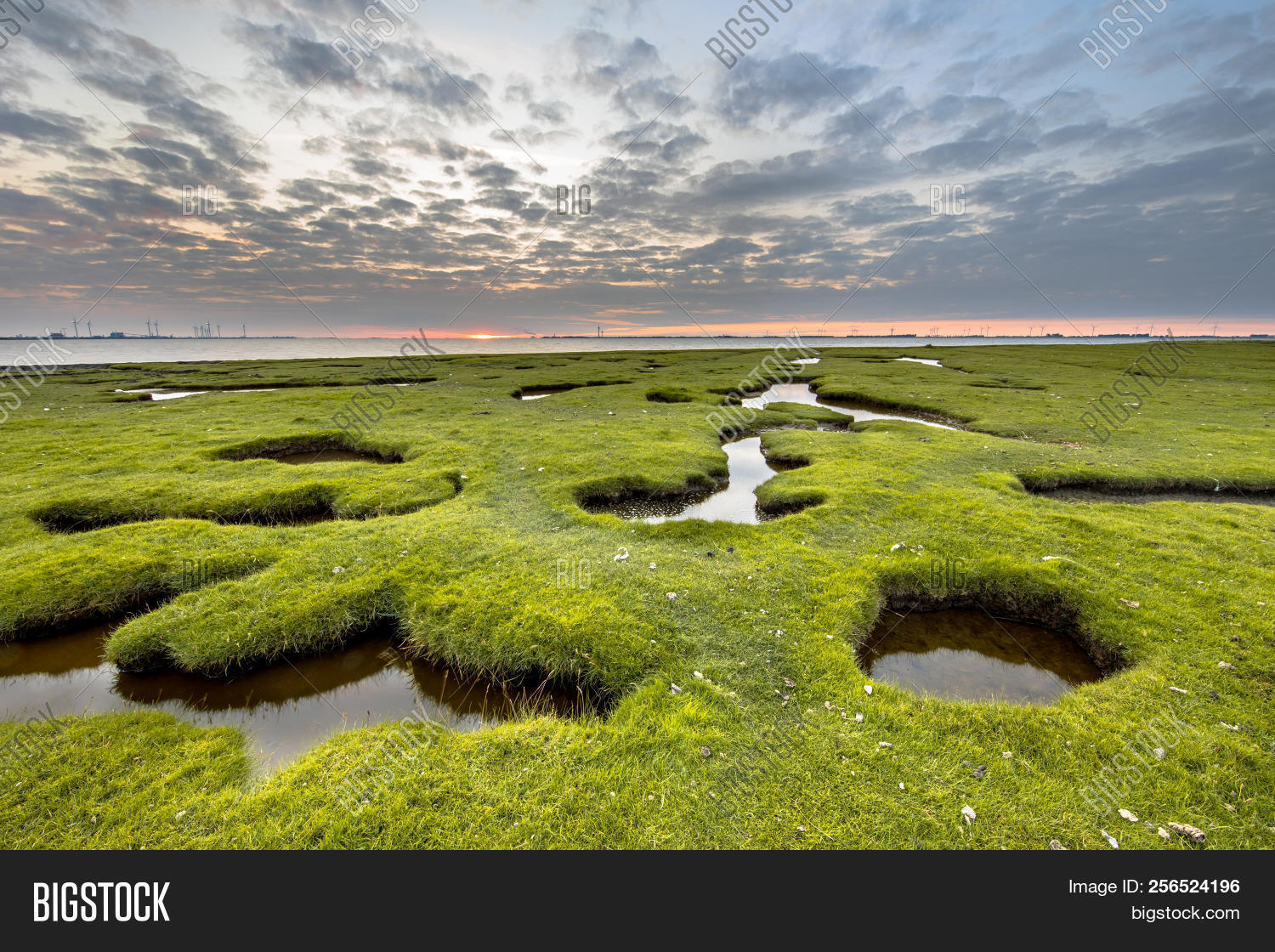 Erosion holes in the tidal marsh grassland of Dollard at the Punt van Reide in the Waddensea area on the Groningen coast in the Netherlands