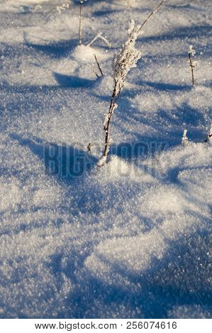 dry grass sticks out from under snowdrifts of fresh snow in the winter season, large crystals of snow and ice adhere on the stems of plants stock photo