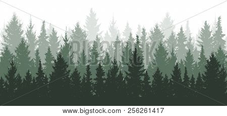 Forest Background, Nature, Landscape. Evergreen Coniferous Trees. Pine, Spruce, Christmas Tree. Silh