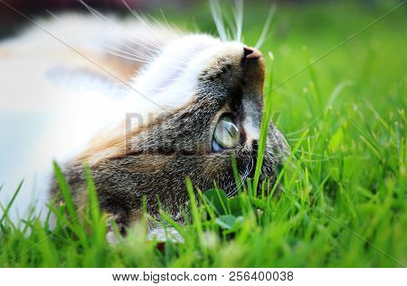 A cat head from side in the middle of grass. She relaxing after some game and hard day. Green eye and white mouth stock photo