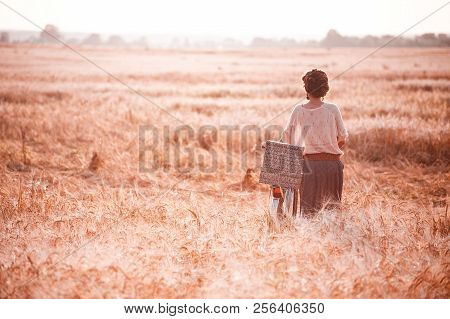 A beautiful girl in a gold rye field romantically goes with her back with a bicycle on which gifts. Free space for text stock photo