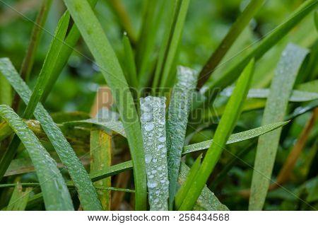 AUTUMN DEW - Crystalline drops on plants stock photo