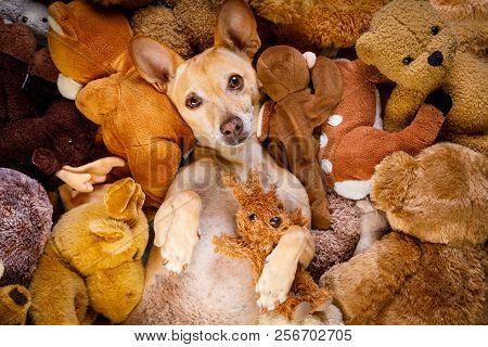 dog resting  having  a siesta  on his bed with his teddy bears,   tired and sleepy stock photo