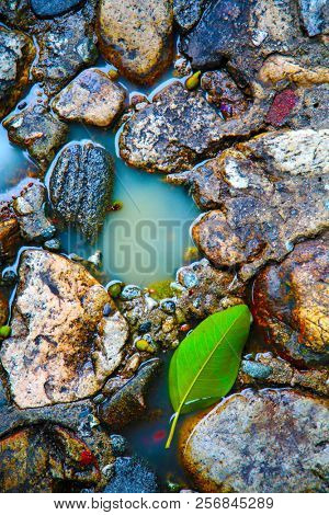 Stone Floor. Color Inhansed. Old Stone Floor with water and green tree leaf. background and textures
