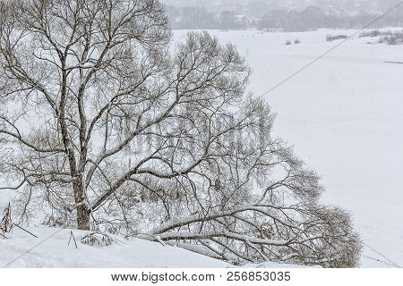 Picturesque landscape with a snow-covered tree on the bank of a frozen river. Snowfall on an overcast winter day stock photo