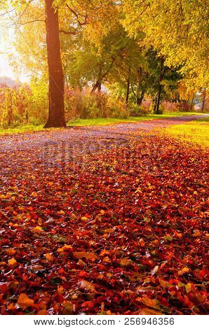 Autumn trees along the park alley in sunny weather. Autumn sunset landscape. Autumn park alley covered with fallen autumn leaves in sunny autumn evening