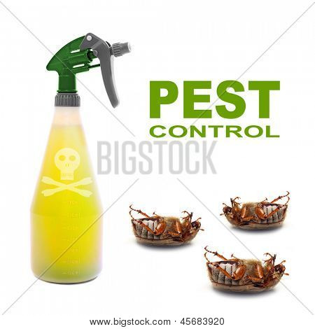 Plastic sprayer with insecticide and dead bugs. Pest control concept. stock photo