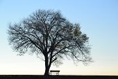 Lonely tree and seat