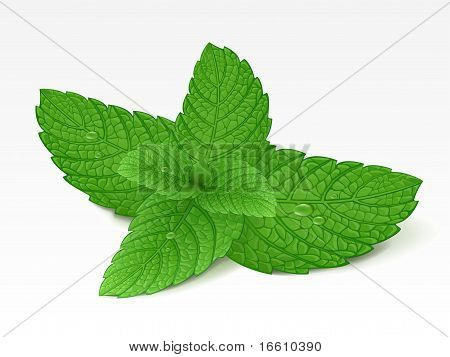Vector illustration of mint leaf with drops stock photo