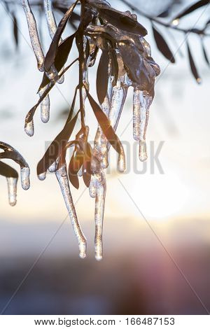Iced tree branches in winter. Frozen day in my country. Very bad weather conditions. Great frosted tree branches with sunlight on the background. stock photo