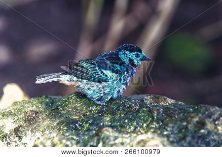 Bird, small cute animal with blue feathers sitting on stone on sunny summer day on blurred natural background. Wildlife and nature. Ornithology stock photo